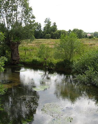 Ruisseau de l'abreuvoir ©Didier Arseguel