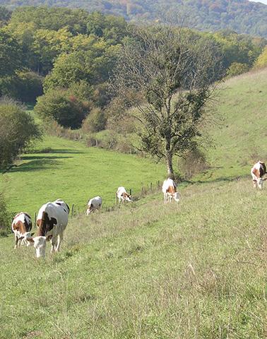 Lironcourt pelouse ©JC Ragué