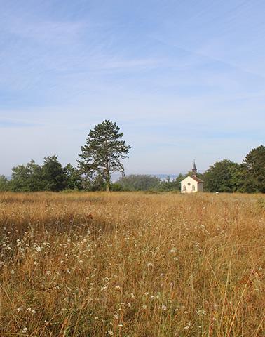 Pelouse Maxey-sur-Meuse ©Cathy Gruber